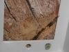 Detalle de portacebo de pared, interceptando galería de termitas